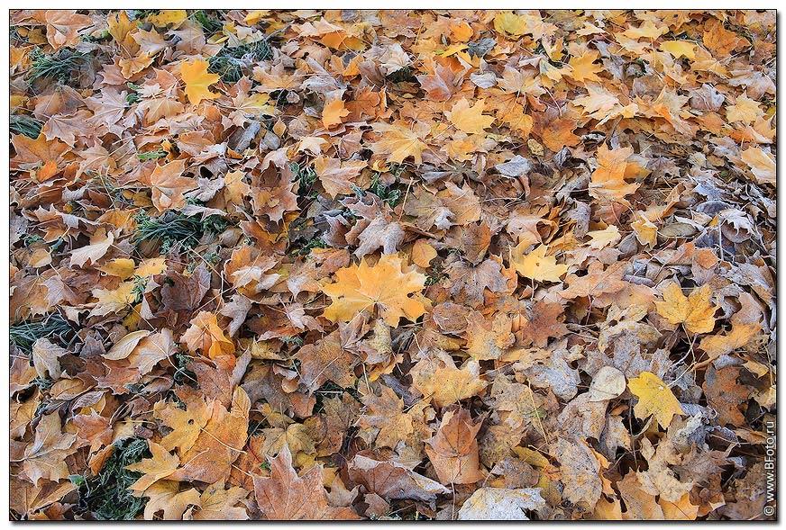 3d полы кленовые листья