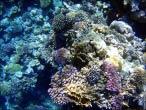 bfoto ru 4225a Подводный фотоаппарат Sony Cyber shot DSC TX10 снимаем под водой!