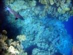 bfoto ru 4227a Подводный фотоаппарат Sony Cyber shot DSC TX10 снимаем под водой!