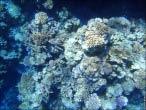 bfoto ru 4229a Подводный фотоаппарат Sony Cyber shot DSC TX10 снимаем под водой!