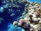 bfoto ru 4234a Подводный фотоаппарат Sony Cyber shot DSC TX10 снимаем под водой!