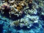 bfoto ru 4235a Подводный фотоаппарат Sony Cyber shot DSC TX10 снимаем под водой!