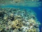 bfoto ru 4236a Подводный фотоаппарат Sony Cyber shot DSC TX10 снимаем под водой!