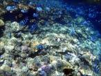 bfoto ru 4245a Подводный фотоаппарат Sony Cyber shot DSC TX10 снимаем под водой!
