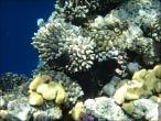 bfoto ru 4248a Подводный фотоаппарат Sony Cyber shot DSC TX10 снимаем под водой!