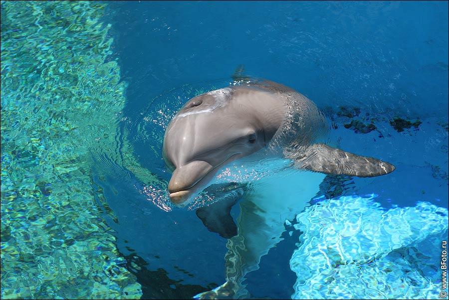 Наливные полы 3д с дельфином гидроизоляция-knauf