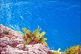 Кактусы на скалах
