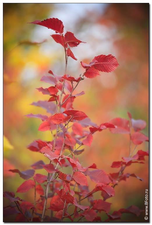 Осень осень в парке предыдущее