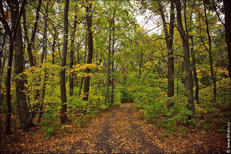 Осенний пейзаж сентябрь лес фото