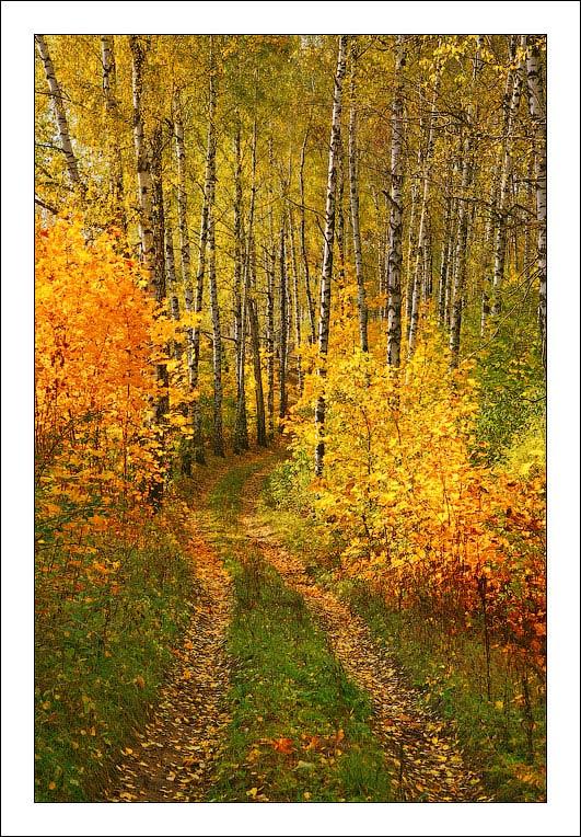 http://www.bfoto.ru/foto/autumn/bfoto_ru_741.jpg