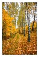 bfoto ru 752a Фотобанк бесплатно фото природы высокого разрешения