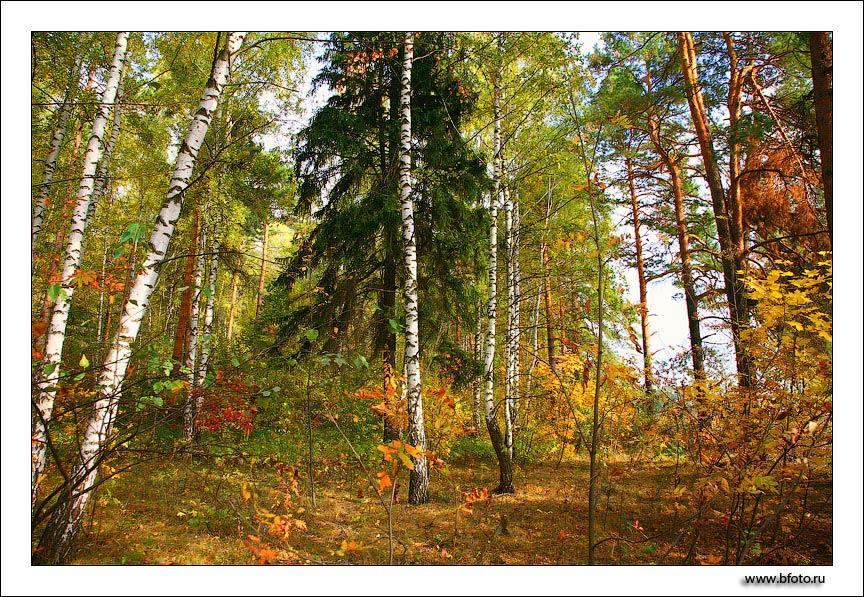 Картинки природы высокого качества в формате jpeg