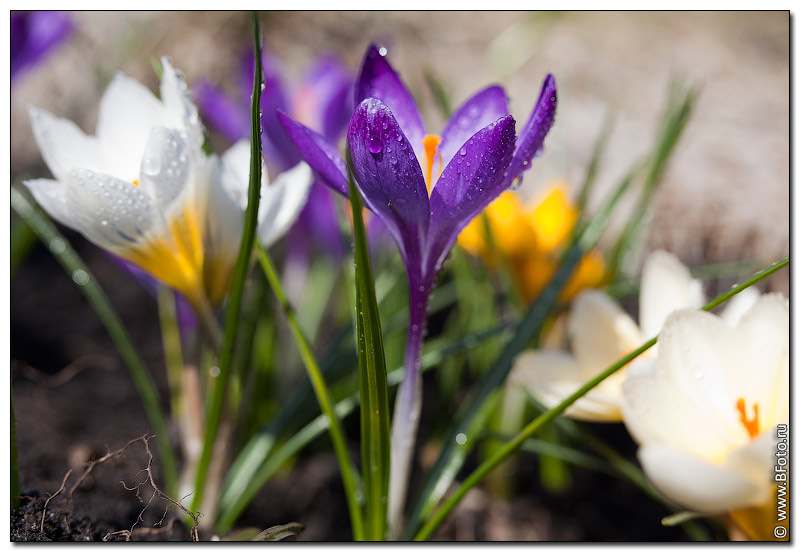 Садовые цветы фотокаталог