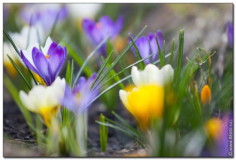 открытки цветы бесплатные: