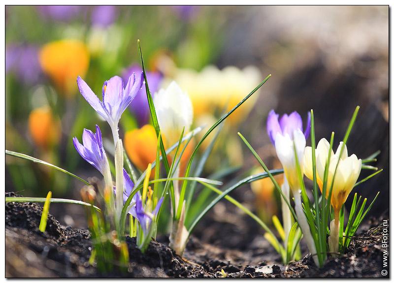 обои на рабочий стол цветы фото большого разрешения, фотобанк: http://www.bfoto.ru/bfoto_ru_2766.php