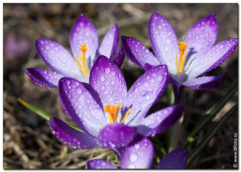 высокого качества фото цветов