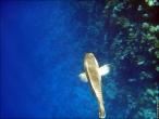 bfoto ru 4241a Подводный фотоаппарат Sony Cyber shot DSC TX10 снимаем под водой!