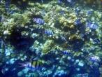 bfoto ru 4243a Подводный фотоаппарат Sony Cyber shot DSC TX10 снимаем под водой!