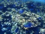 bfoto ru 4247a Подводный фотоаппарат Sony Cyber shot DSC TX10 снимаем под водой!