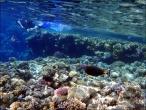bfoto ru 4249a Подводный фотоаппарат Sony Cyber shot DSC TX10 снимаем под водой!