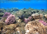 bfoto ru 4250a Подводный фотоаппарат Sony Cyber shot DSC TX10 снимаем под водой!