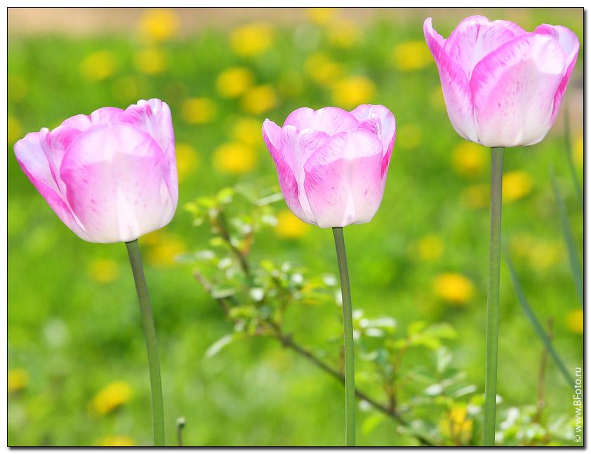 http://www.bfoto.ru/foto/flowers/bfoto_ru_1515.jpg