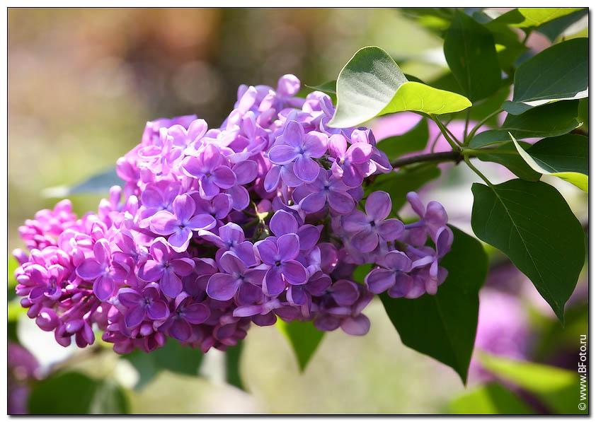картинки цветы россии: