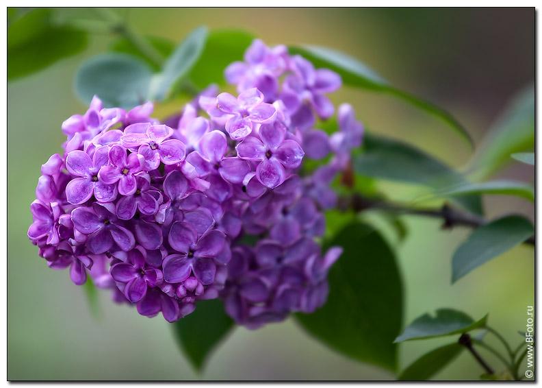 Цветок из норки своими руками