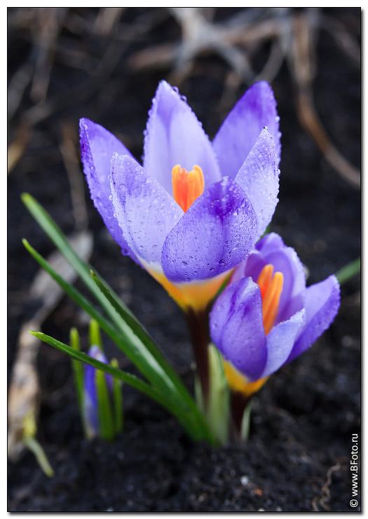 Весенние цветы на даче фото