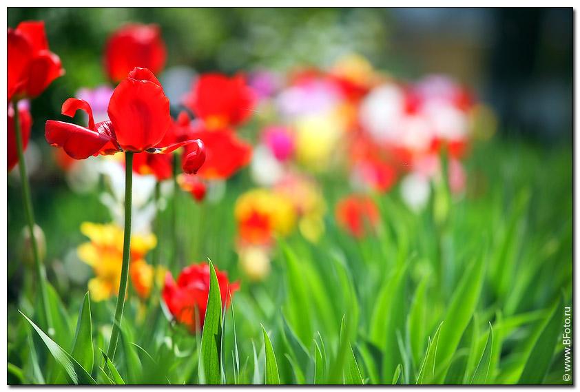 Картинки весны высокое разрешение
