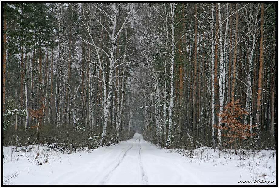 фотография леса