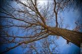 Фото дерева