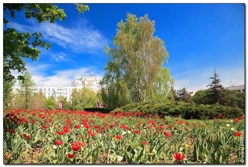 Пейзаж поле красных тюльпанов