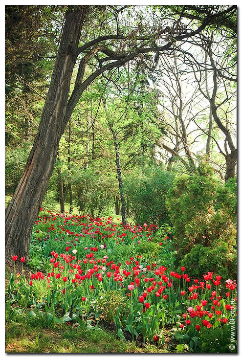 Цветы в весеннем лесу