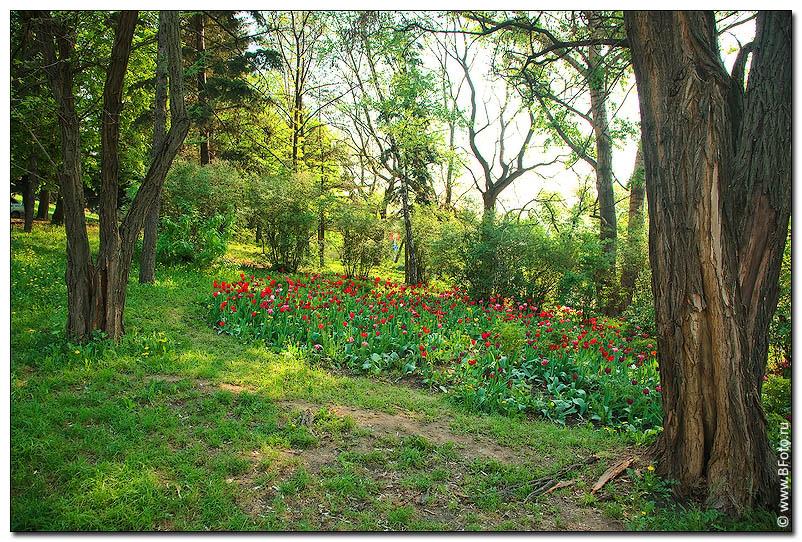 Поляна тюльпанов