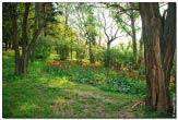 bfoto ru 1682a Дыхание весны в интерьере дома, квартиры, весенние фотообои