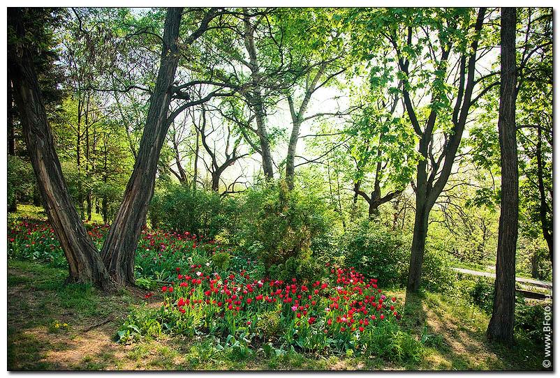 Полянка цветов в парке