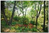 bfoto ru 1683a Дыхание весны в интерьере дома, квартиры, весенние фотообои