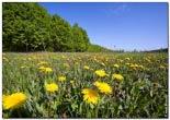bfoto ru 1686a Дыхание весны в интерьере дома, квартиры, весенние фотообои