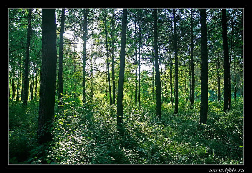 http://www.bfoto.ru/foto/forest/bfoto_ru_2.jpg