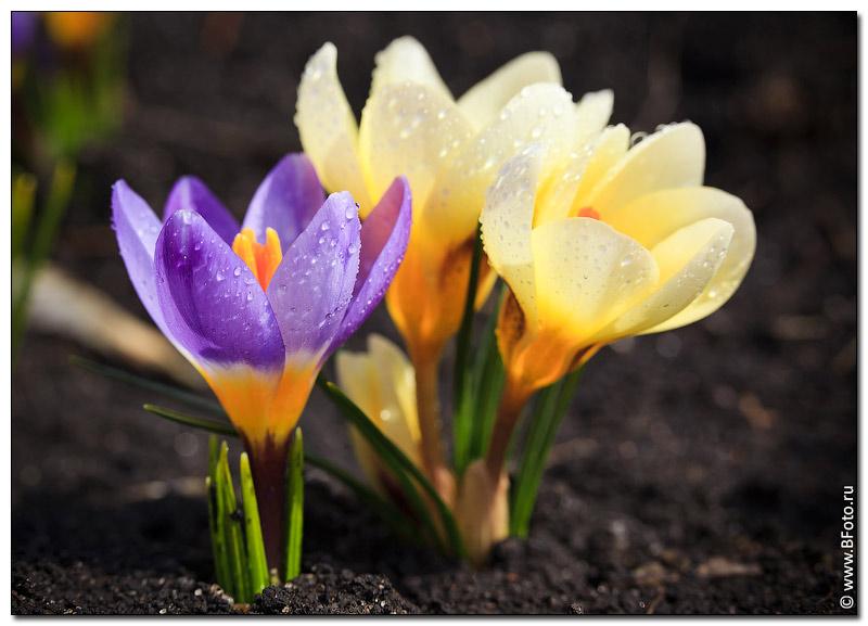 Живые цветы фото большого разрешения
