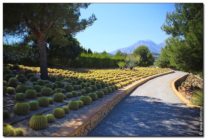 Сад кактусов ботанический природный