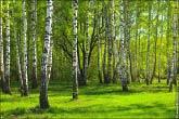 bfoto ru 4168a Панорама для печати 12 на 2 метра, в качестве наружной рекламы