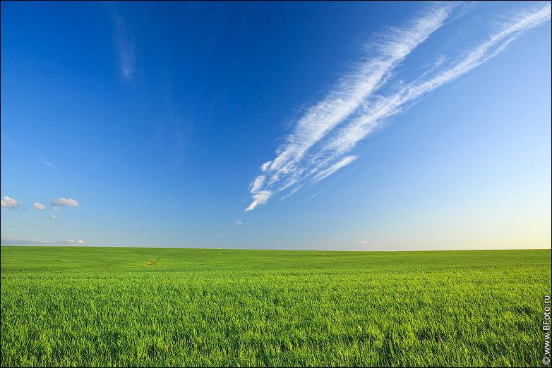 фото ромашковое поле высокого разрешения