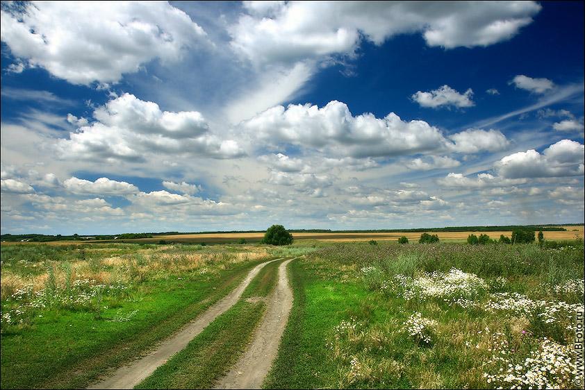 Пейзажи лес поле ромашковое поле