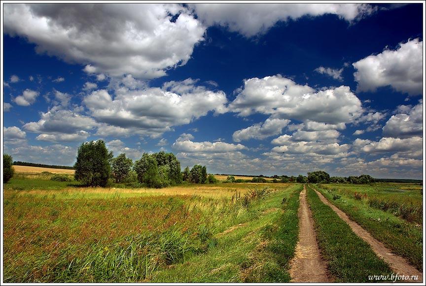 Фото дорога в лес картина лето летняя