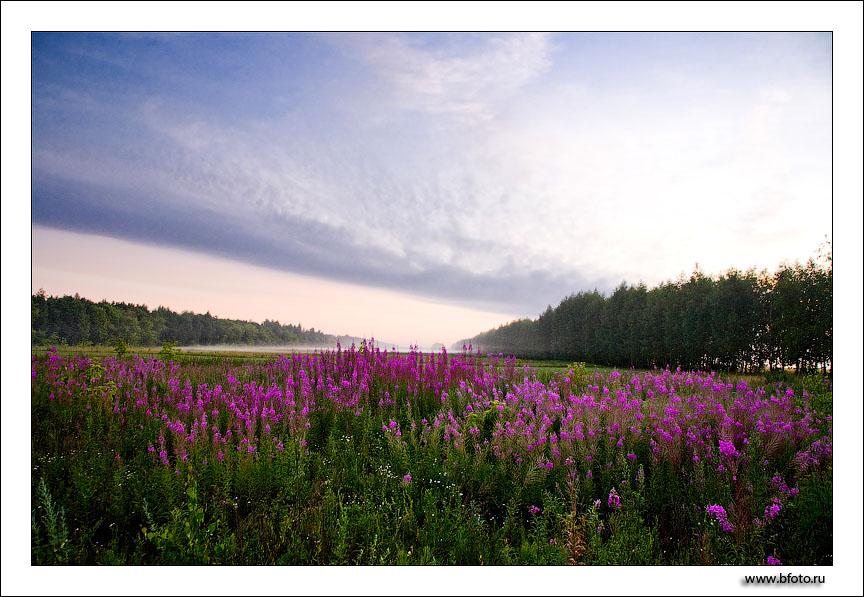 http://www.bfoto.ru/foto/forest/bfoto_ru_626.jpg