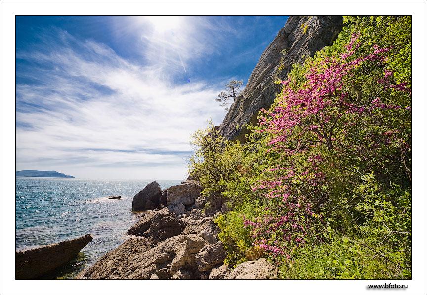 Весна в крыму, природа расцветает