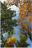 bfoto ru 85a Фотобанк бесплатно фото природы высокого разрешения