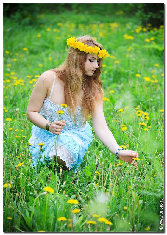 Фото полевых цветов высокого разрешения